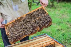 Buckfast Abbey Bees | New Project | Sarah Jane Hodge