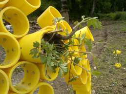 Honey Bee Gas Pipe Sculpture with LandWorks - testing the planting