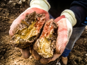 Beautiful cob sample from within the LandWorks plot - most materials for the sculpture are sourced on site or within the Dartington Hall Estate