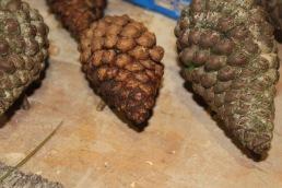 Pine cones small